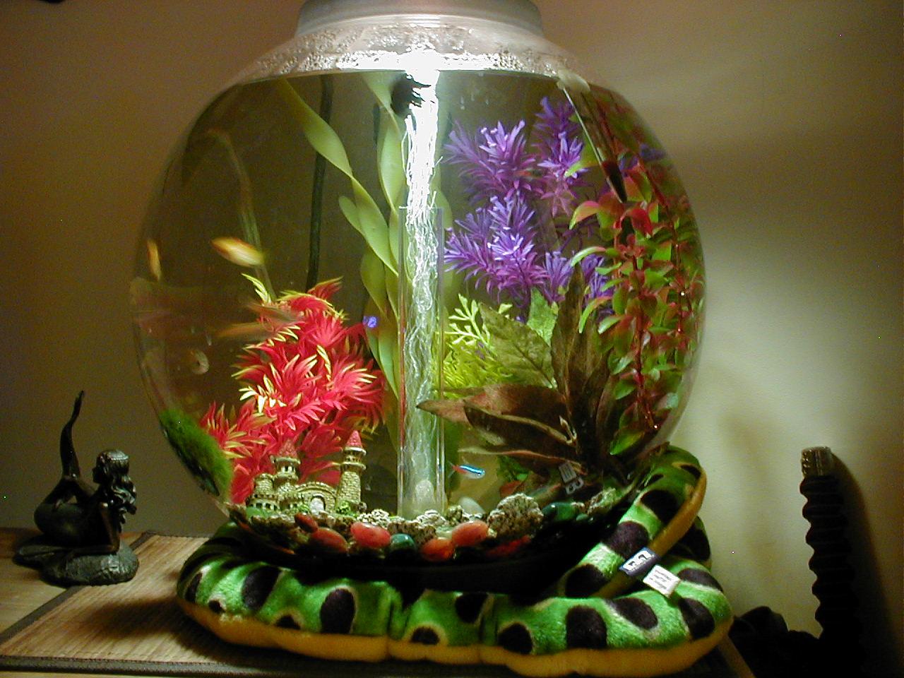 Small fish tank maintenance uk maintaining small for Small fish tanks