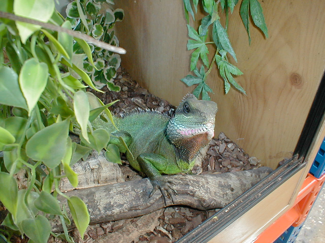 We also love reptiles and as well as a reptile rescue for Outdoor aquarium uk
